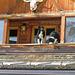 Sollen wir wirklich? Refugio Friedrich Heinrich, Campitello, Trentino, Italien