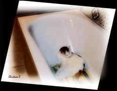 L'heure de la toilette !  ***  Time to wash up ! (:o))