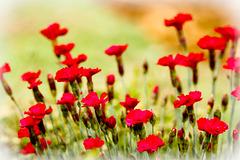 Des fleurs pour vous tous !