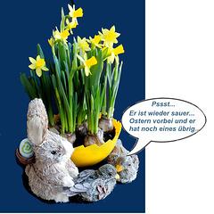 Frustrierter Oster Hase... Frustrated Easter Bunny... ©UdoSm