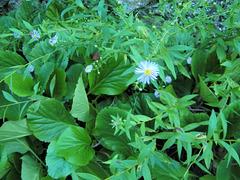 Verdure fleurie