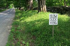 IMG 5808-001-Slow Duck Xing