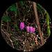 Vista circular de naturaleza-2
