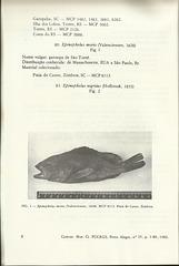 lucena   lucena epinephelus morio