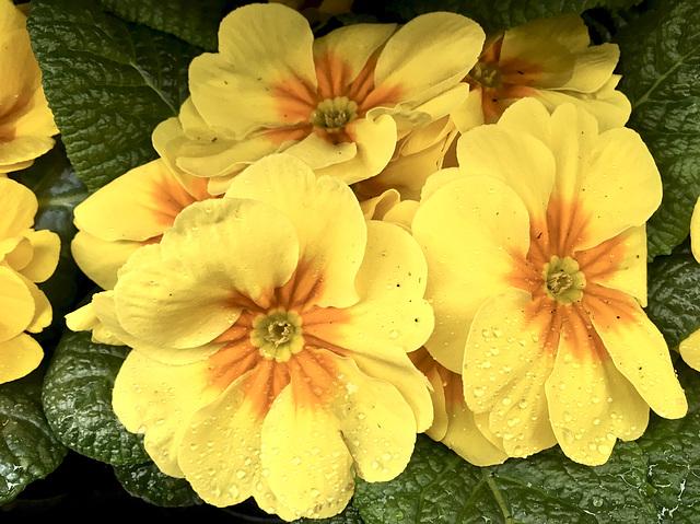 gelb/orange