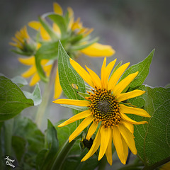 Pictures for Pam, Day 152: Mule Ears