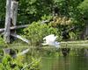 27/50 grande aigrette-great egret