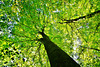 Es wird Herbst im Buchenwald - Autumn in the beech woods