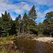 Rothiemurchus Forest near Coylumbridge
