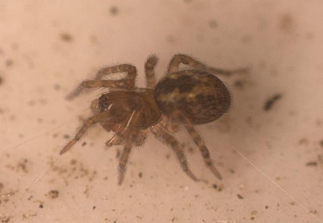 SpiderIMG 1640