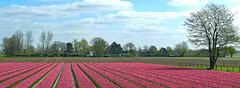 Nederland, Egmond aan den Hoef