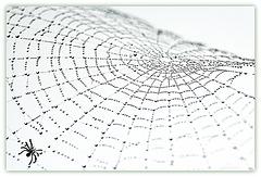 Web of Deceit !!