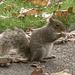 Squirrel Eating 01