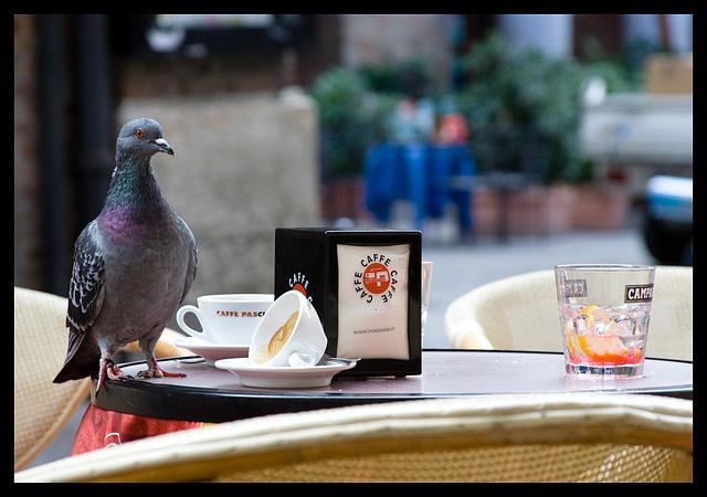 Campari and pigeon