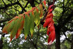 Les couleurs de l'automne en été .