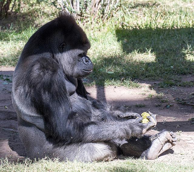 Albuquerque zoo set 322
