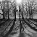 LX Berlin trees (1)