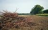 Twigs in the field