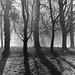 LX Berlin trees (2)