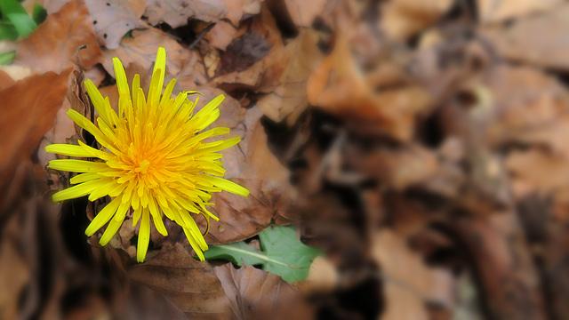 Frühling und Herbst