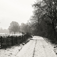 The Old Drive, Lamer Park