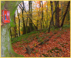 Father Francis Blesses the Autumn Forest