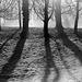 LX Berlin trees (3)