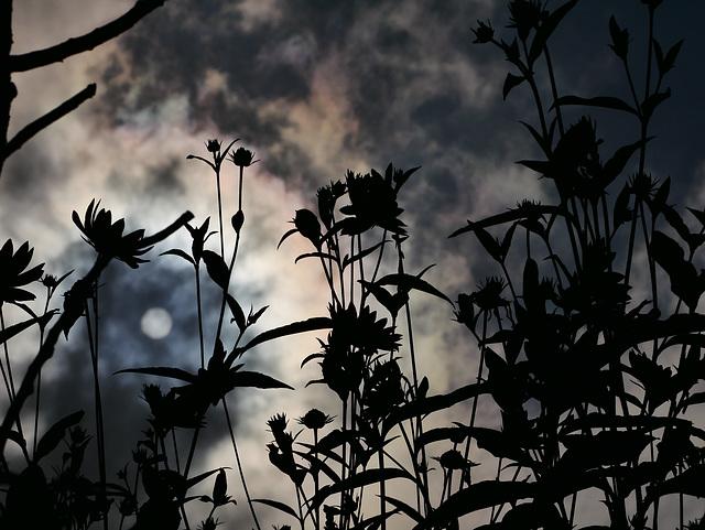 Tempestuous Sky
