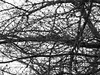 Branches and twigs