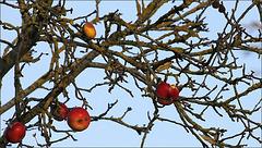 Le fruit (mal) défendu.... ;-)