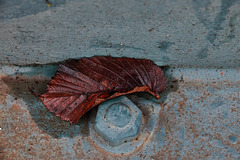 Rust,Rot And Nature