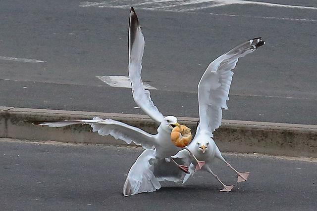 EOS 6D Peter Harriman 07 43 54 2815 BirdsRoll dpp