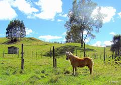 Attractive pony