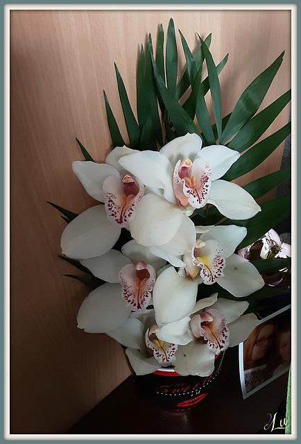 ** Orchidée **