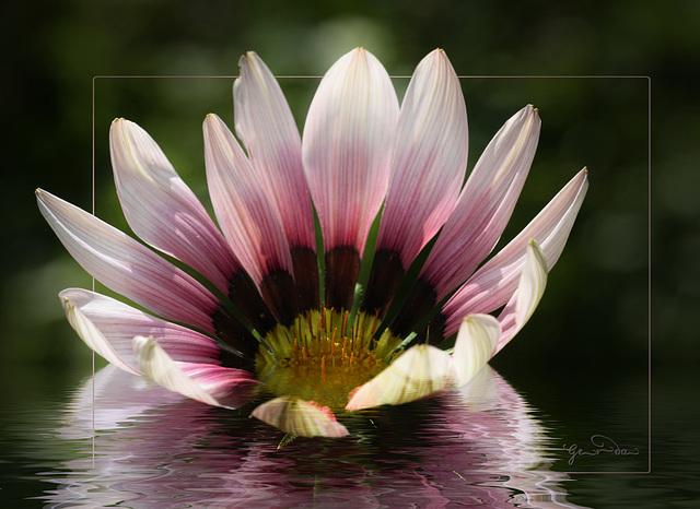 Impression d'une fleur ~