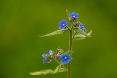 Wildflowers at Burton Mere wetlands2
