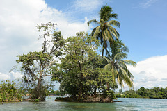 Guatemala, Trees with Nesting of Egrets and Cormorants in the Middle of Rio Dulce