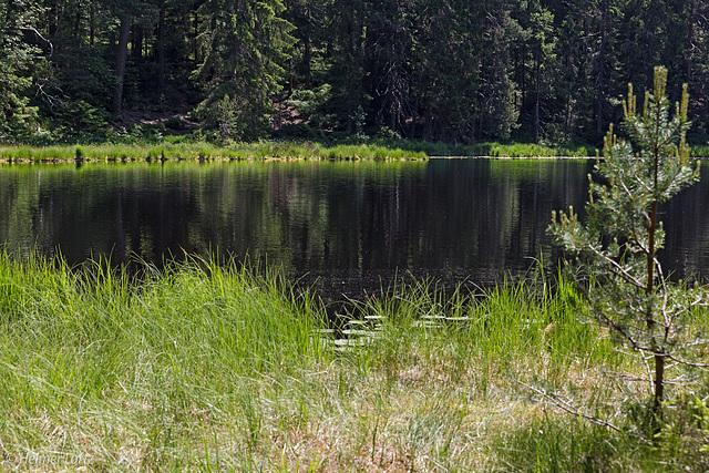 Am Herrenwieser See, 830 m