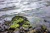 Seaweed (05.07.2018)