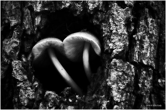 Tree Dwellers.