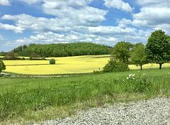 Landschaft im Mai