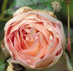 Une fleur pour votre coeur...