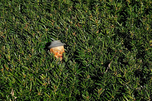 Head in a Bush