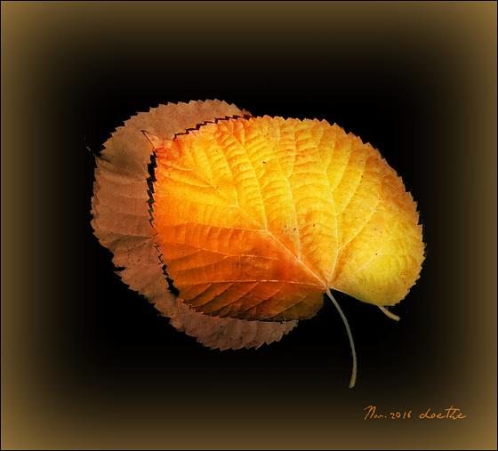Basswood leaves II