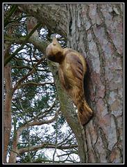 Wood woodpecker