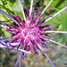Spiky mountain flower.