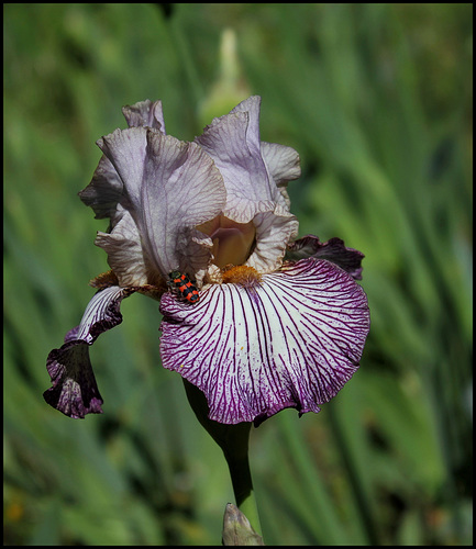 Iris Piccadilly Circus (2)