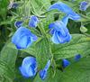 Une touche de bleu / A touch of blue