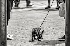 Another Dog in Manhattan