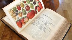Berries (Meyer´s Encyclopedia from 1894)